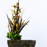 Ikebana di Nicoletta Barbieri