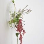 Diplocyclos palmatus - erica- pepe verde
