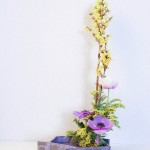 Forsithia - solidago - anemone