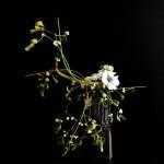 Vischio - anemone - stecche di plastica