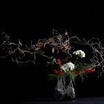 Nocciolo contorto - nadeshiko - ilex- aspaagina