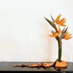 Strelizia - cocci di terracotta