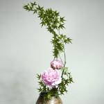 Acero - peonia