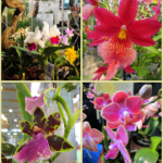 collage-orchidee-